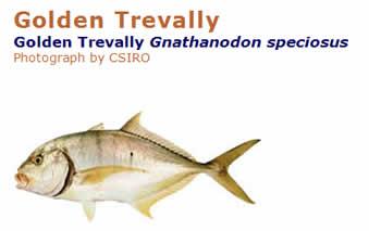 golden trevally
